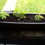 Squirrelled Herbs