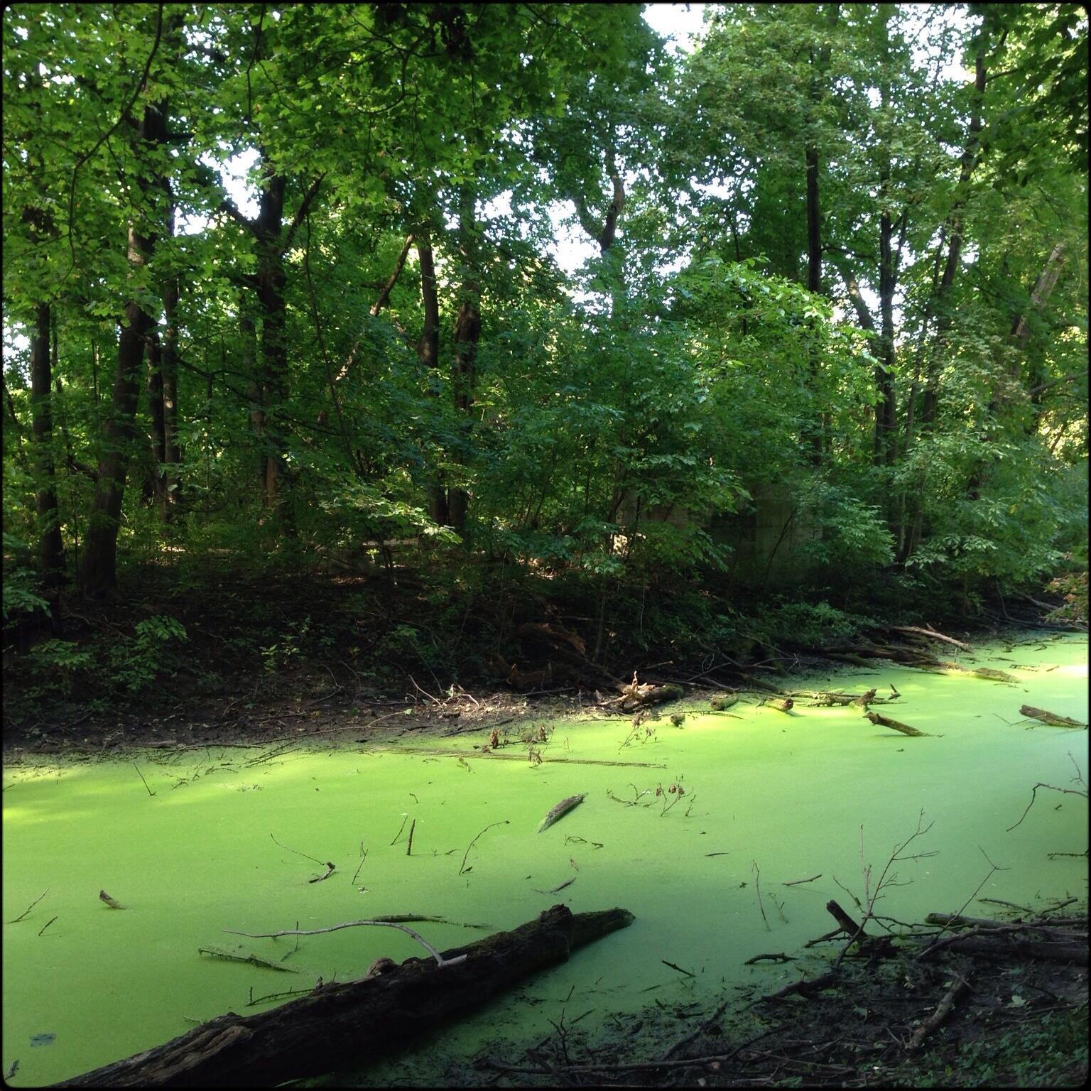 peche-greenwater