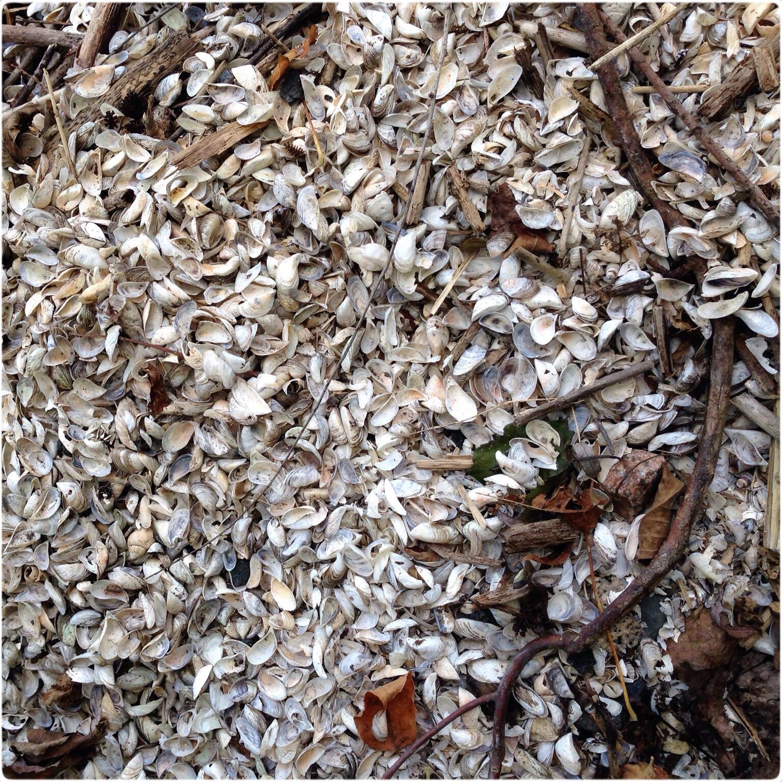 peche-mussels