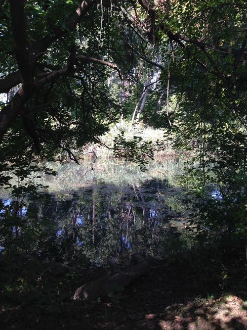 peche-swamp
