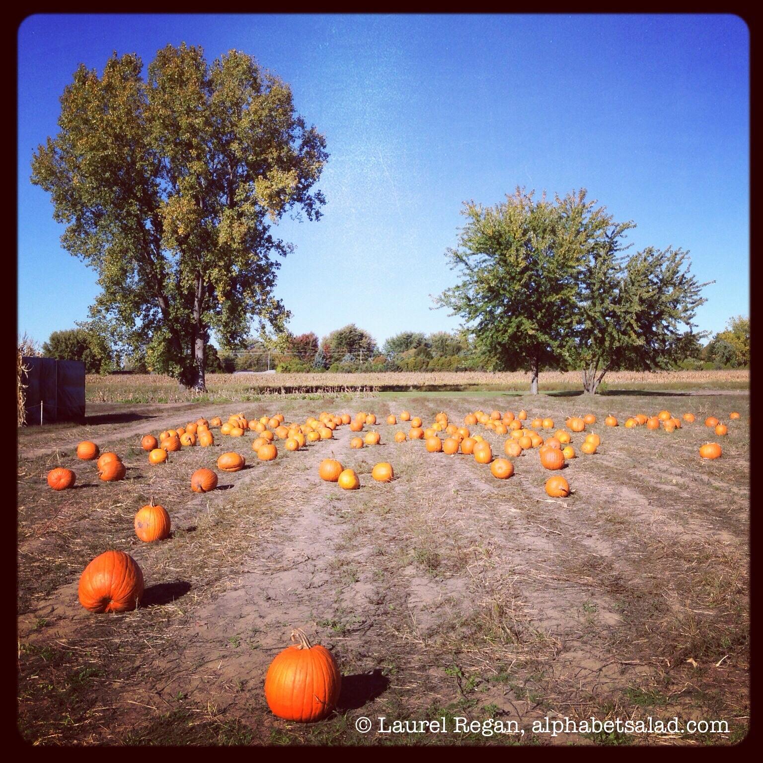 Photo Friday: Rural