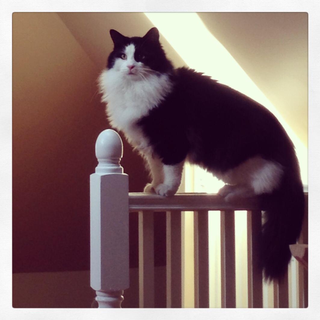 Felix-railing